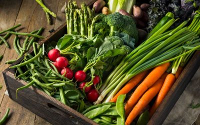 Ten Foods to Help Boost Your Immune System